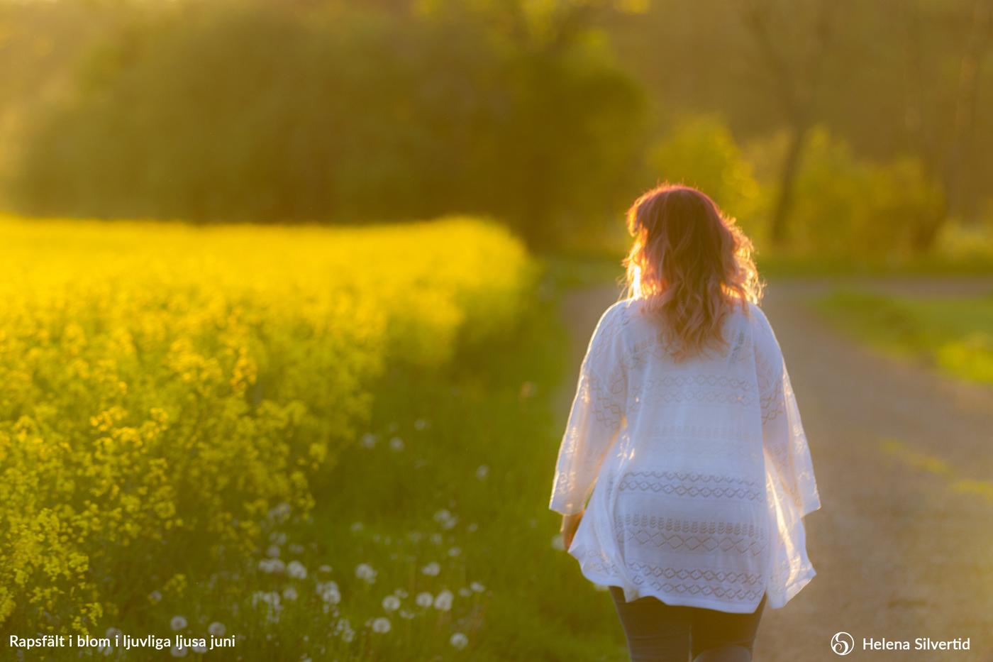 06-2021-Juni-Rapsfält-i-blom-i-ljuvliga-ljusa-juni-Foto-av-Helena-Silvertid