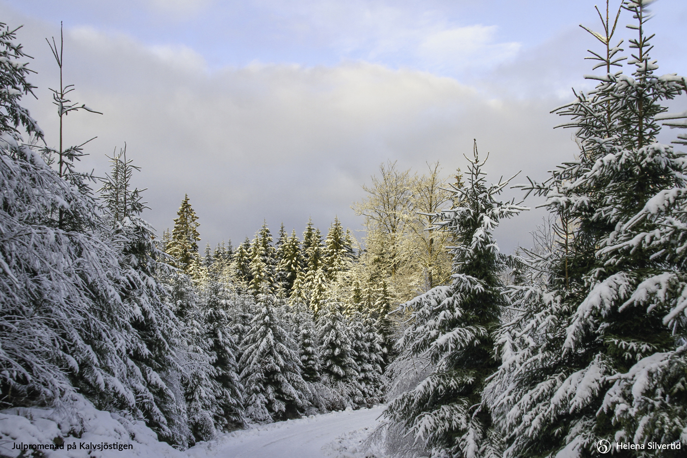 12-2021-December-Julpromenad-på-Kalvsjöstigen-Foto-av-Helena-Silvertid