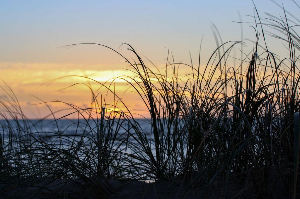 Strandgräs vid Björkängs Havsbad i solnedgången. Foto av Helena Silvertid