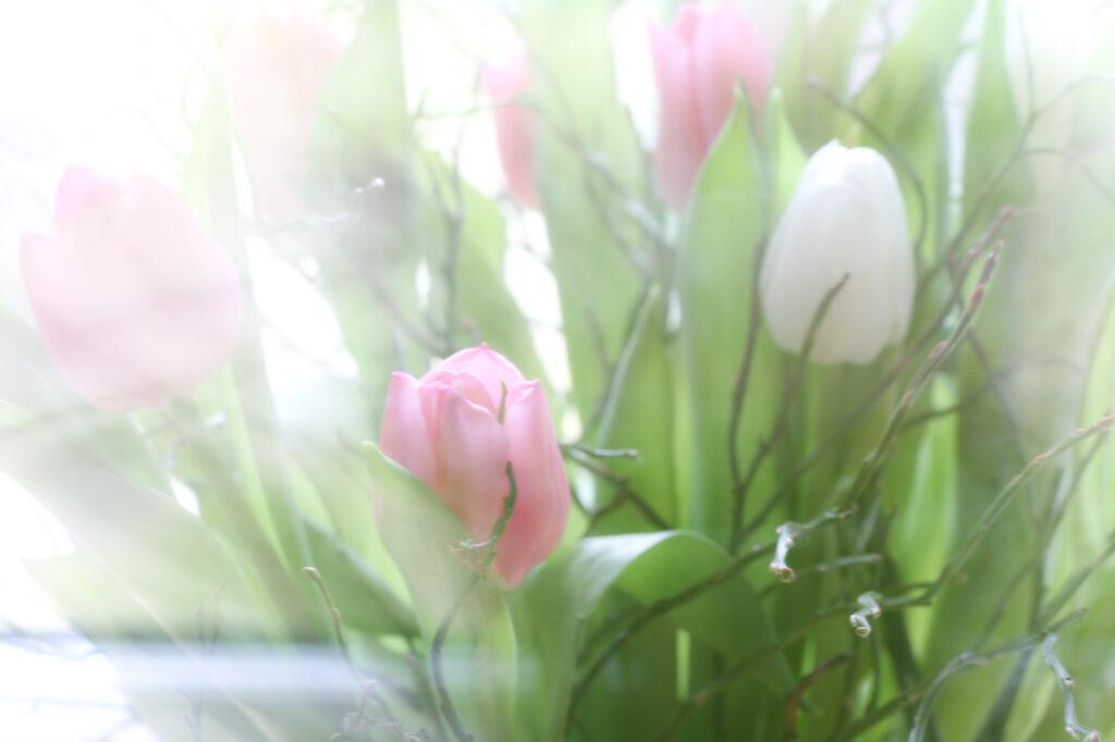 Tulip Spring Dance