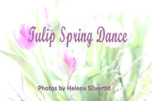 Läs mer om artikeln Tulip Spring Dance